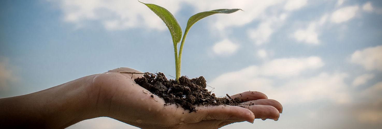 Hand holding seedling plant